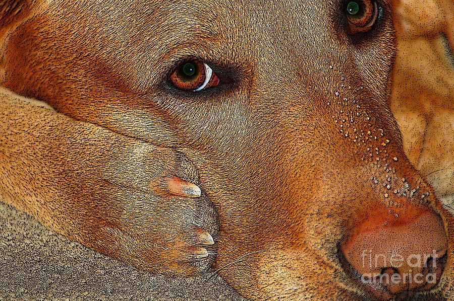 Diane Berry Photograph - Pout by Diane E Berry