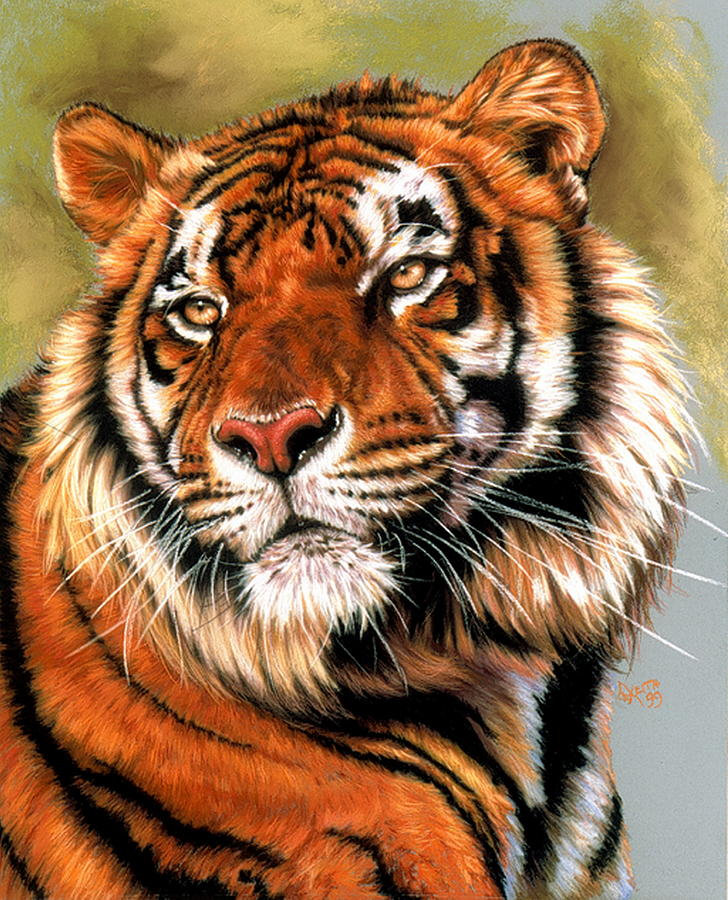 Tiger Pastel - Power And Grace by Barbara Keith