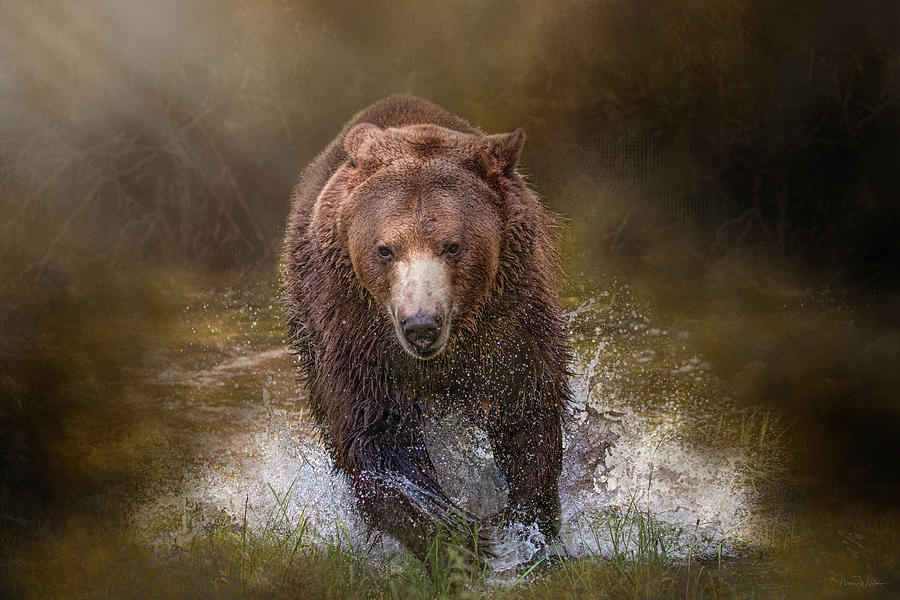 Power of the Grizzly by Nicole Wilde