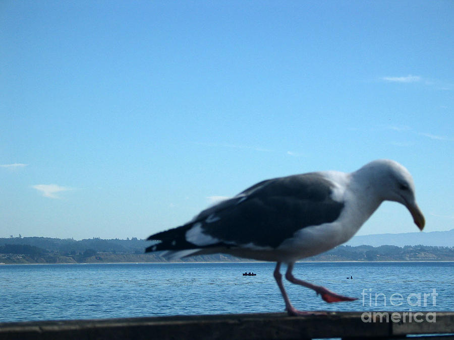 Landscape Photograph - pr 117 - A  Seagull On Thr Fence by Chris Berry