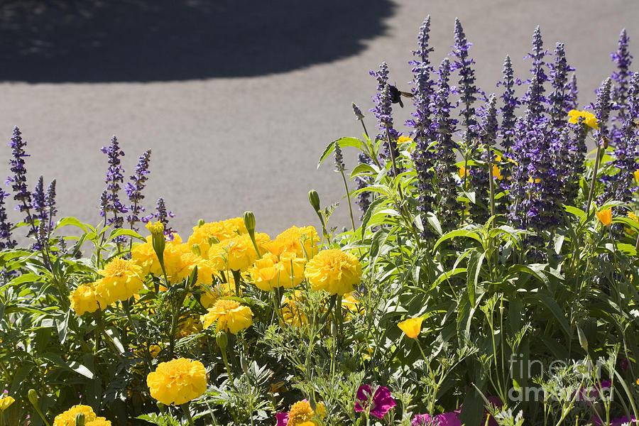 Landscape Photograph - pr 141 - Flower Bed by Chris Berry
