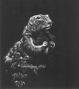 Prairie Drawing - Prairie Doggin by Robert Ryan