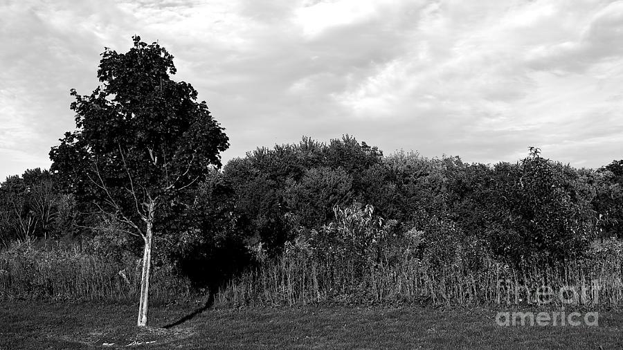 Prairie Photograph