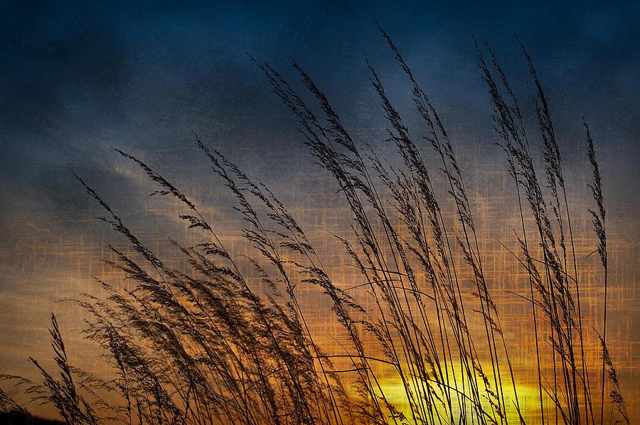 Prairie Photograph - Prairie Grass Sunset Patterns by Steve Gadomski