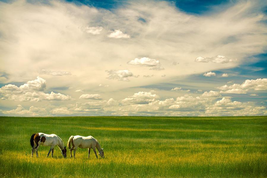 Prairie Horses by Todd Klassy