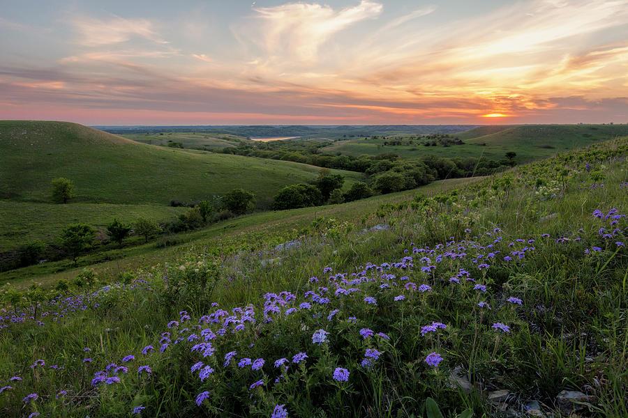 Fine Art America Photograph - Prairie In Bloom by Scott Bean