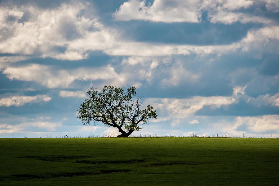 Lone Tree Photograph - Prairie Survivor by Jeff Phillippi