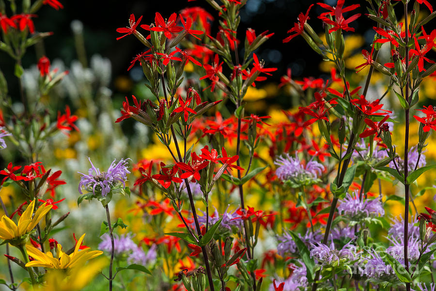 Flowers Photograph - Prairie Wildflowers 2 by Fiona Craig