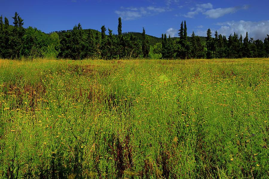 Prati In Fiore Blossoming Fields Photograph By Enrico Pelos