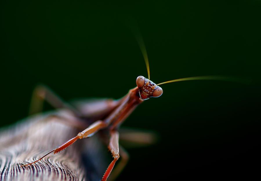 Praying Mantis by Rob Hemphill