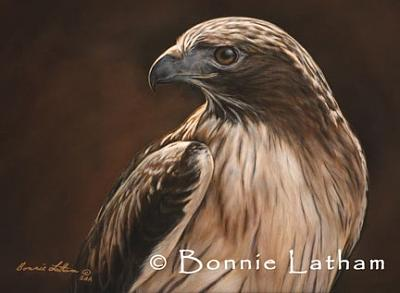 Miniature Painting - Predator  -  Red Tailed Hawk by Bonnie Latham