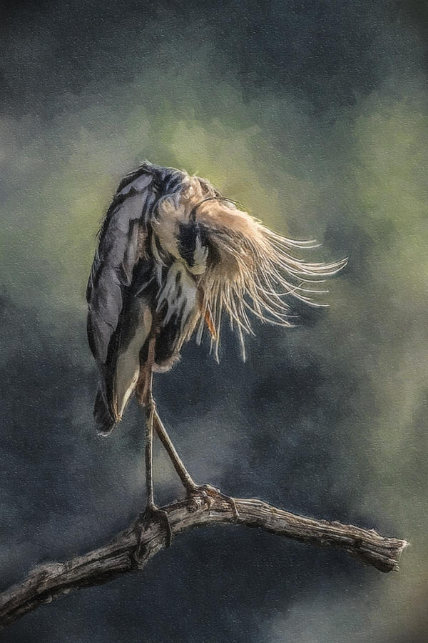2009 Photograph - Preening Great Blue Heron by Lauren Brice