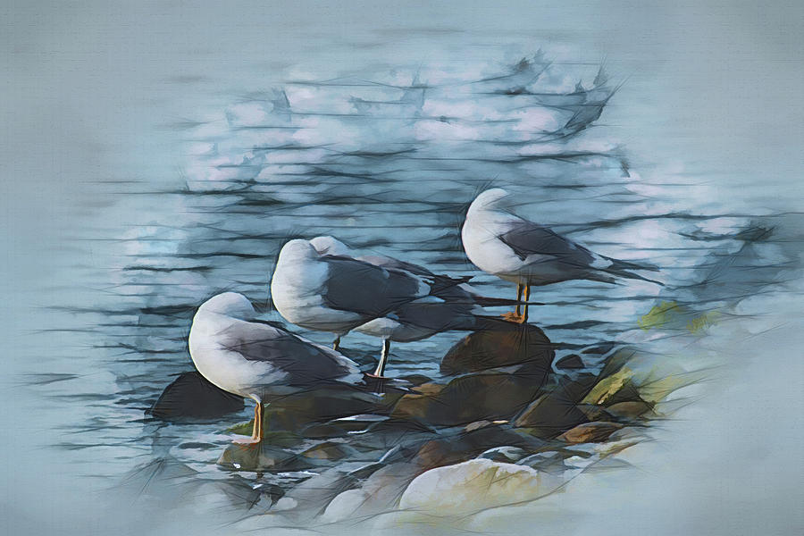 Preening Gulls by Richard Farrington