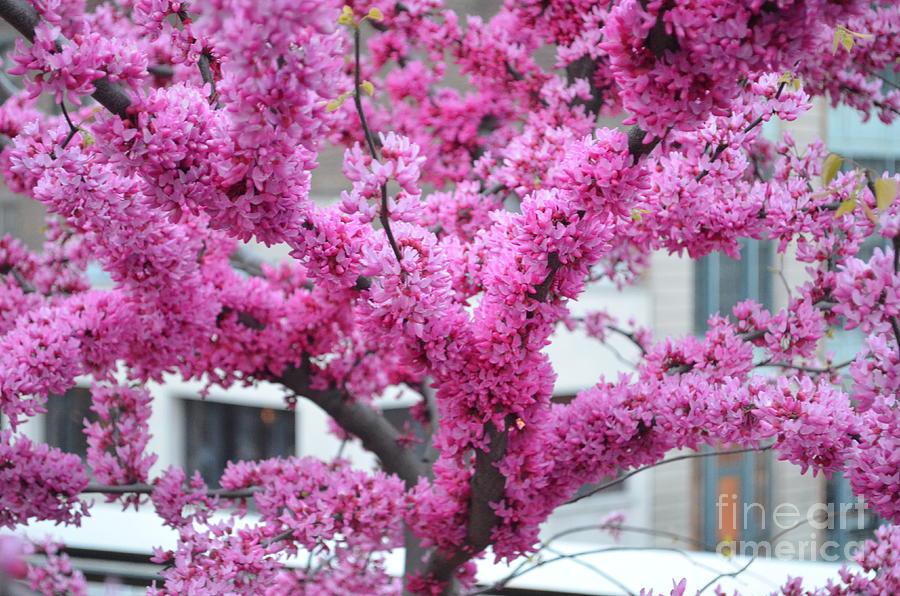 Flower Photograph - Pretty In Pink by Des Brownlie
