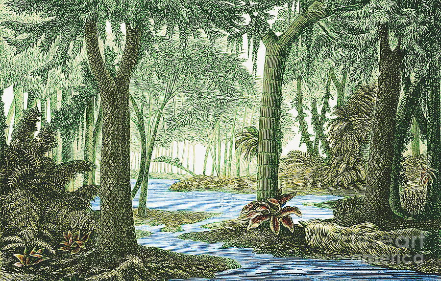 Prehistoric Flora Carboniferous Period Photograph By Science Source