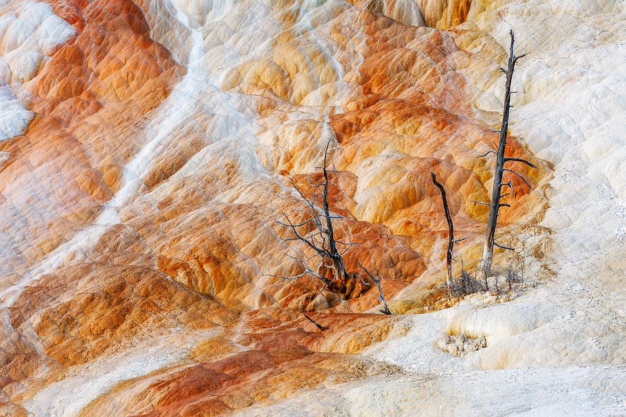 Trees Photograph - Prehistoric Trees by Todd Klassy