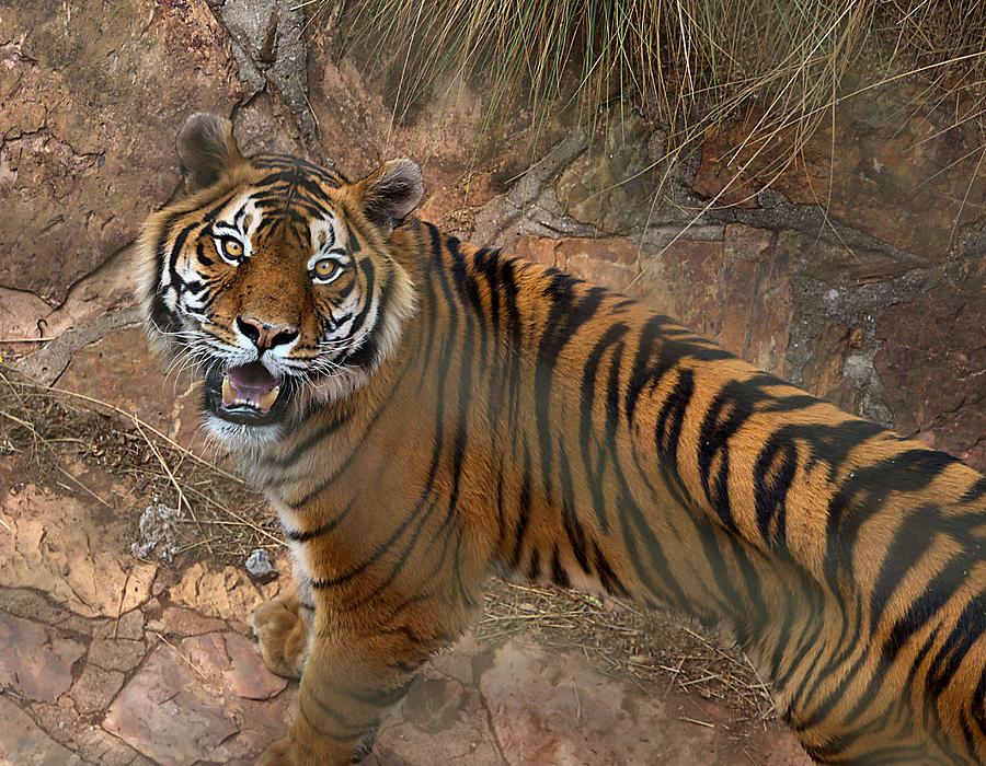 Pretoria Photograph - Pretoria Zoo by Steven Richman