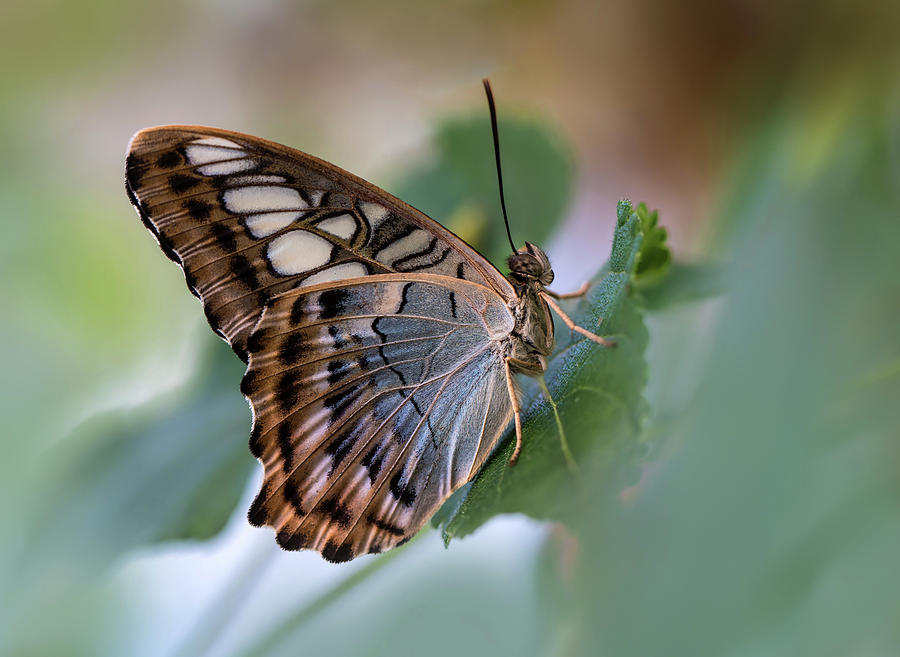 Flowers Photograph - Pretty Butterfly Resting On The Leaf by Jaroslaw Blaminsky