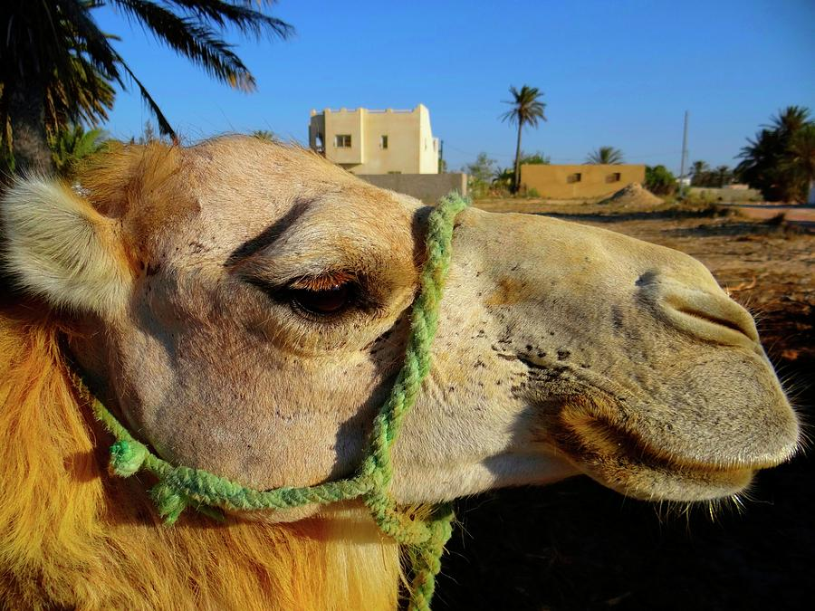 Unschooling Photograph - Pretty Camel by Exploramum Exploramum