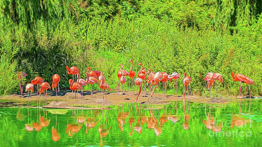 Pretty Flamingos Photograph