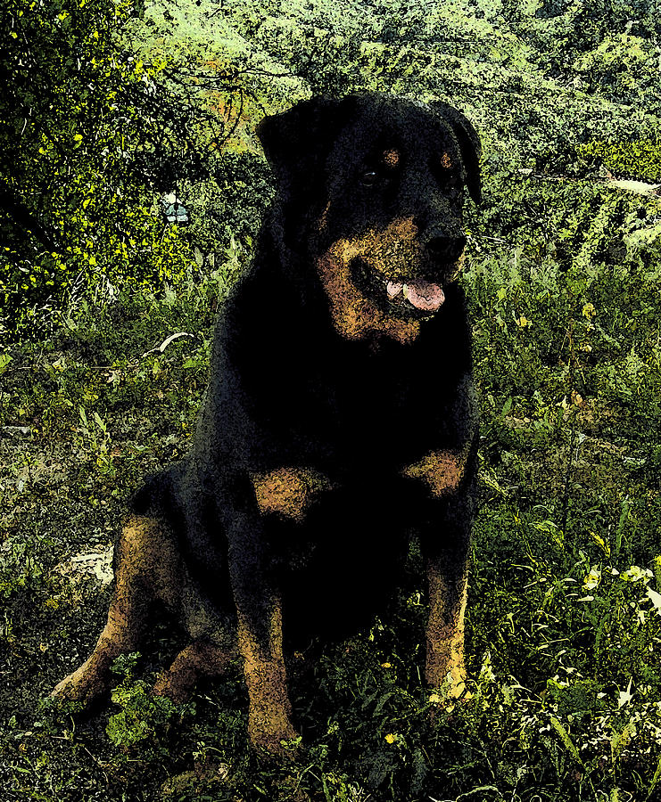 Rottweiler Photograph - Pretty Girl by Jessica B