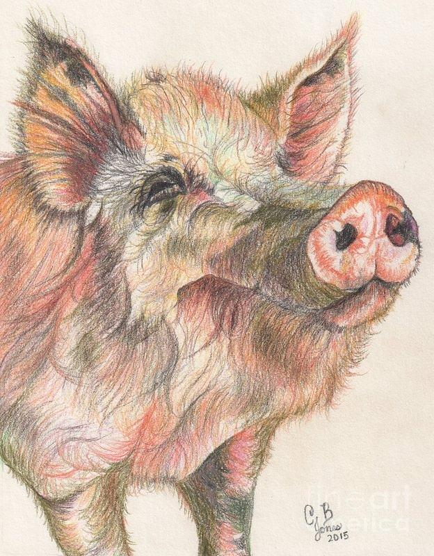 Pig Drawing - Pretty Imporkant Pig by Chris Bajon Jones