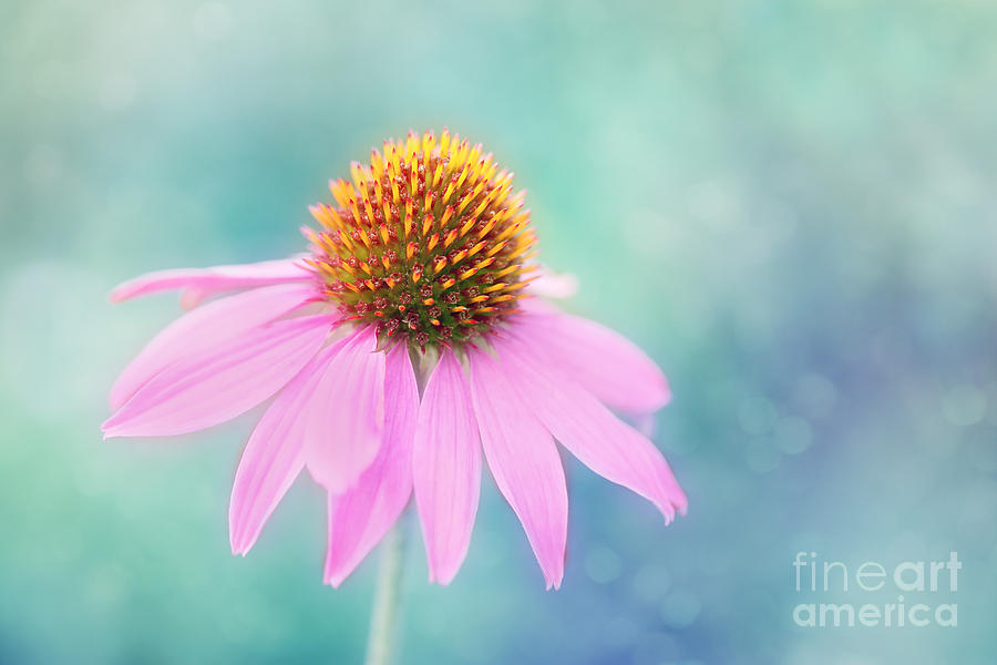Pretty In Pink.... Photograph