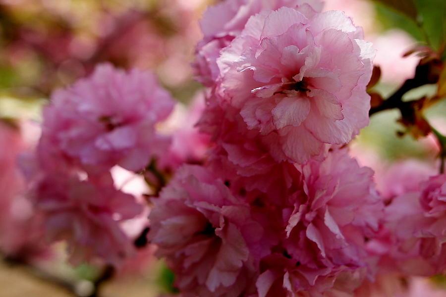 Pink Photograph - Pretty In Pink by Lisa Jayne Konopka
