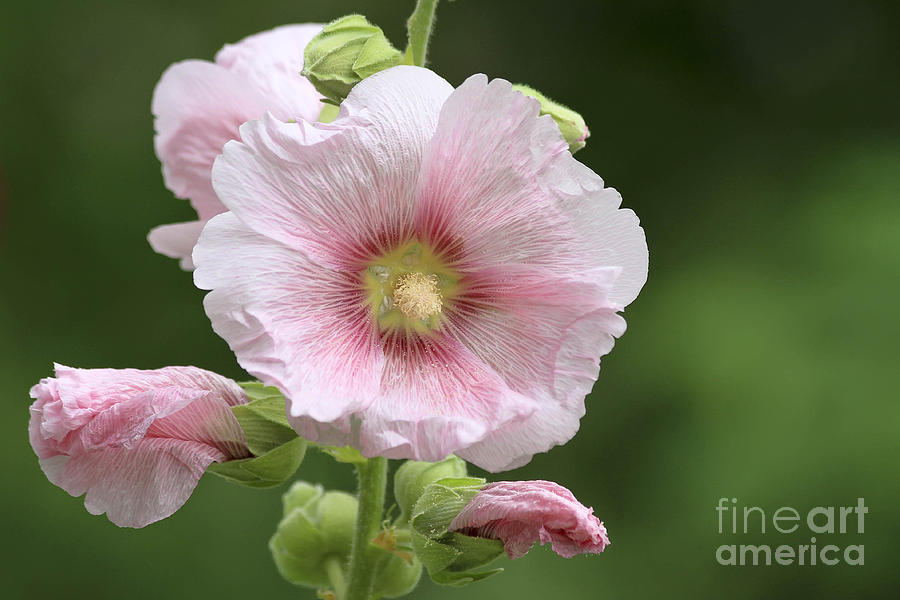 Flower Photograph - Pretty In Pink by Teresa Zieba