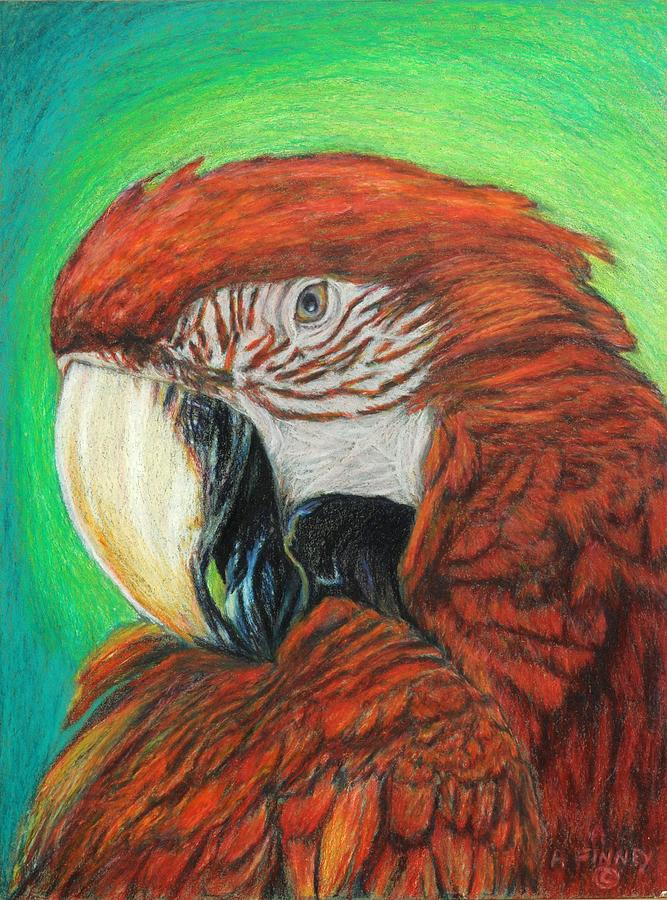 Scarlet Macaw Drawing - Pretty In Red by Angela Finney