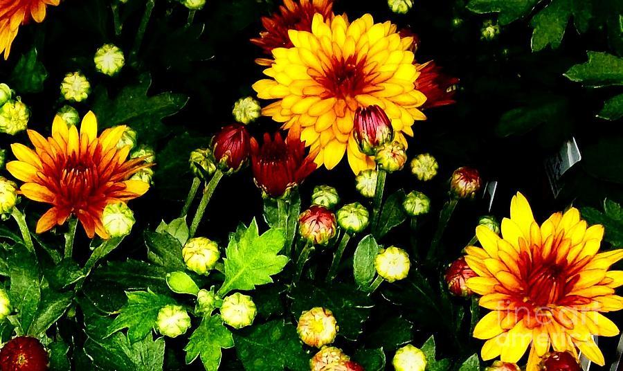 Photo Photograph - Pretty Petals by Marsha Heiken