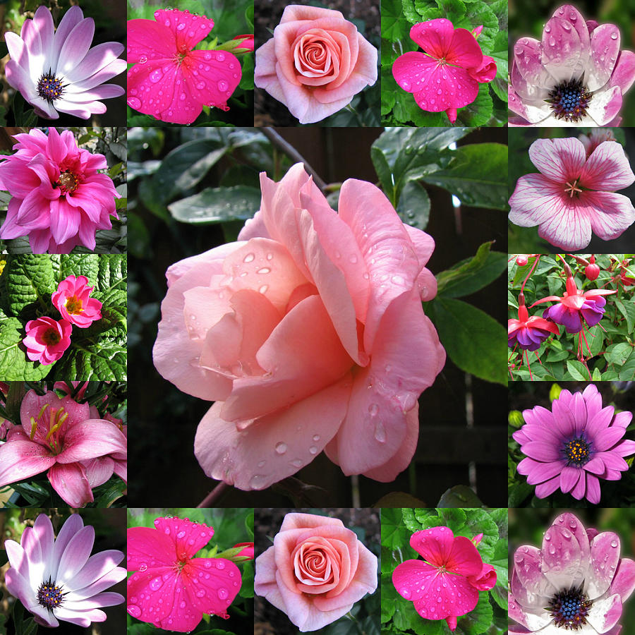Pretty Pink Flowers Collage Photograph By Kathryn Jones