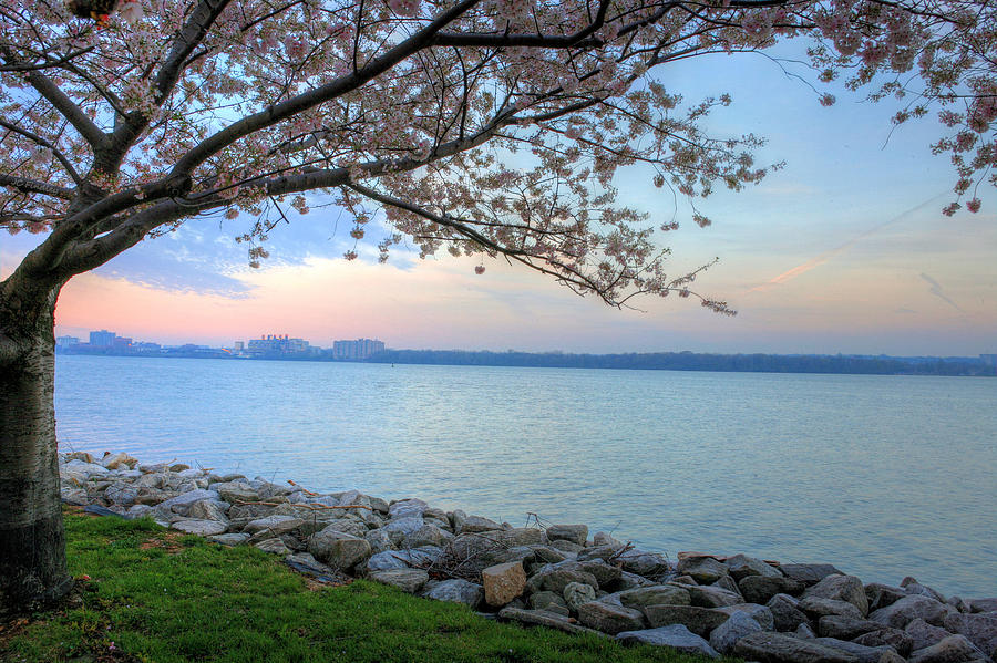 Cherry Blossoms Blossom Washington Dc Potomac River Sunrise Sunset Joint Base Anacostia Bolling Afb Alexandria Va Virginia Photograph - Pretty Potomac by JC Findley