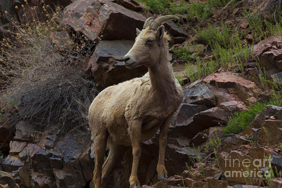 Colorado Photograph - Pretty Proud by Barbara Schultheis