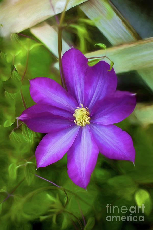 Pretty Purple Photograph