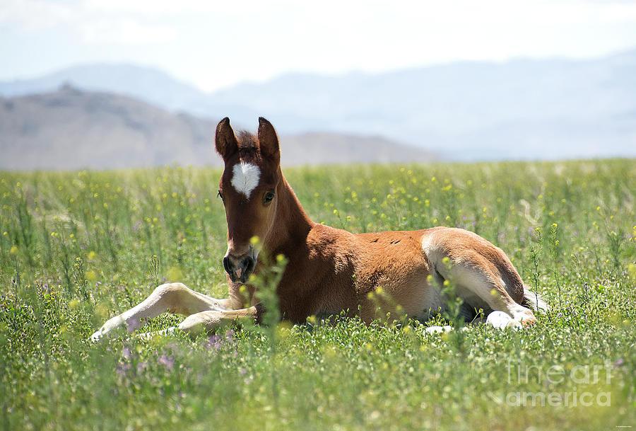 Nikon Photograph - Pretty Spring Colt by Nicole Markmann Nelson