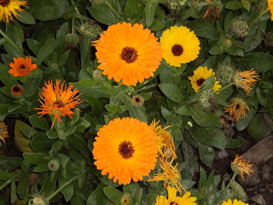 Landscape Photograph - Pretty Yellow Flowers by Munir Ahmad