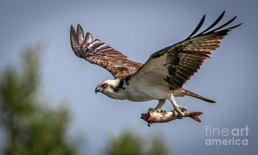 Bird Of Prey Talons 2