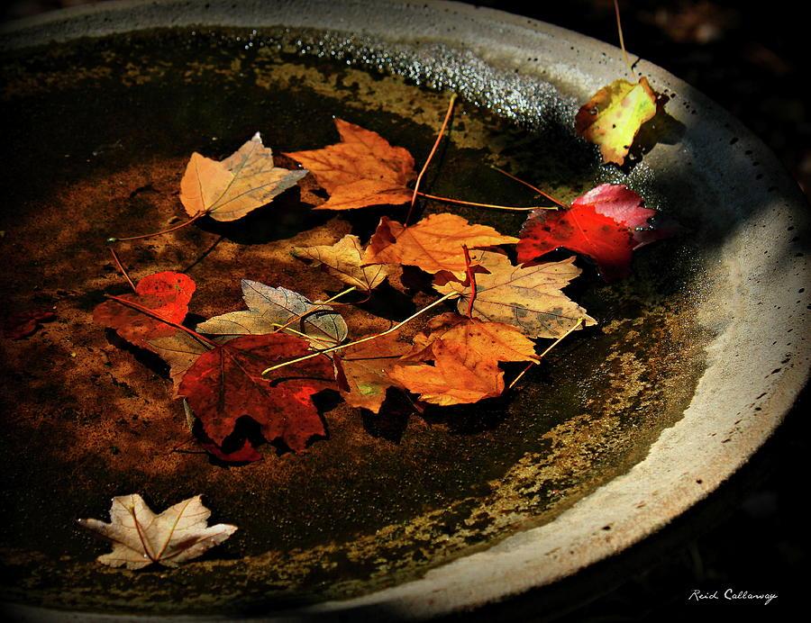 Bird Bath Photograph - Priceless Leaves Fall by Reid Callaway