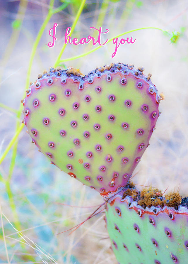 Prickly Heart by Karen Stephenson