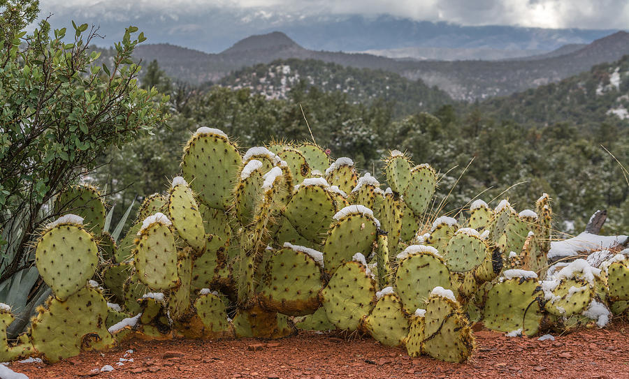 Cactus Country by Racheal Christian