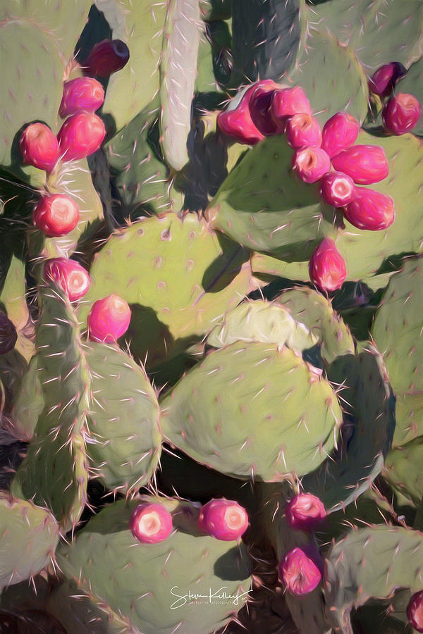 Prickly Pear Cactus by Steve Kelley