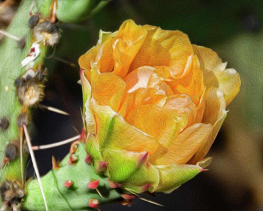 Prickly Pear Flower Op23 Photograph