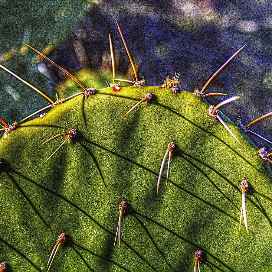 Prickly Pear Study No. 9 Photograph