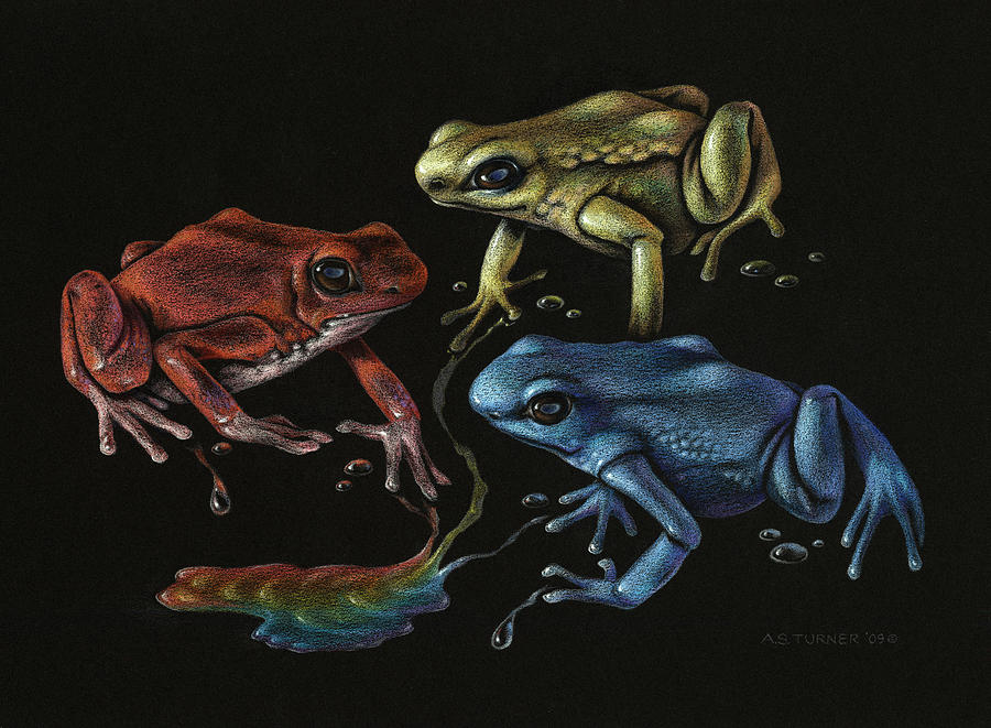 Frog Drawing - Primary Poison by Amy S Turner