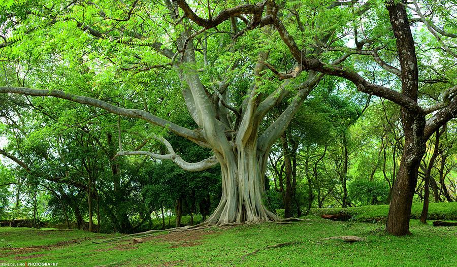 2018 Photograph - Primeval Tree by Irene Del Pino