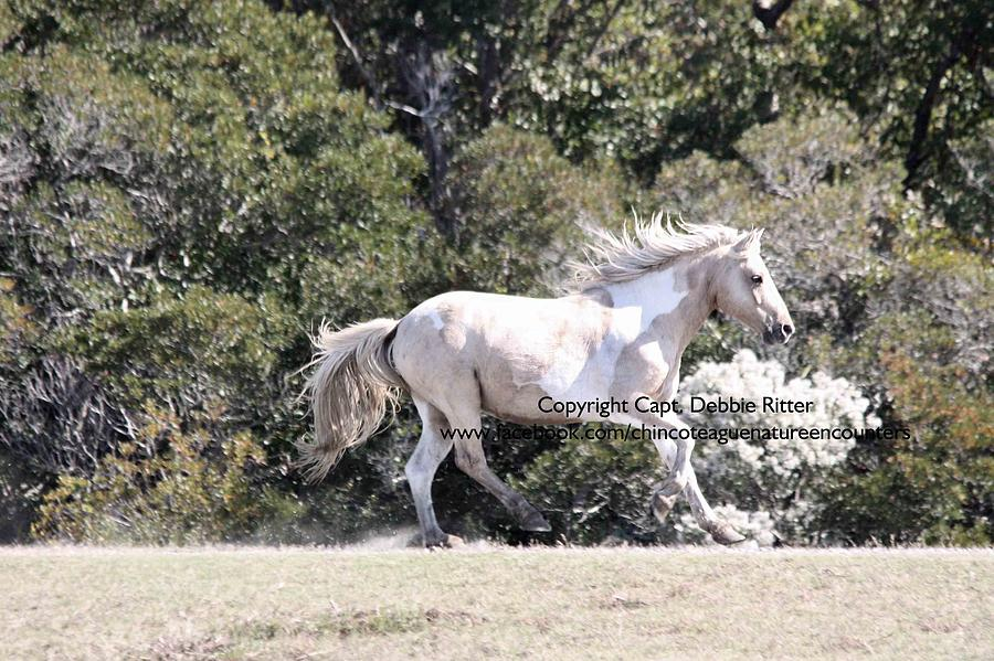 Pinto Photograph - Prince of Tides 2015 by Captain Debbie Ritter