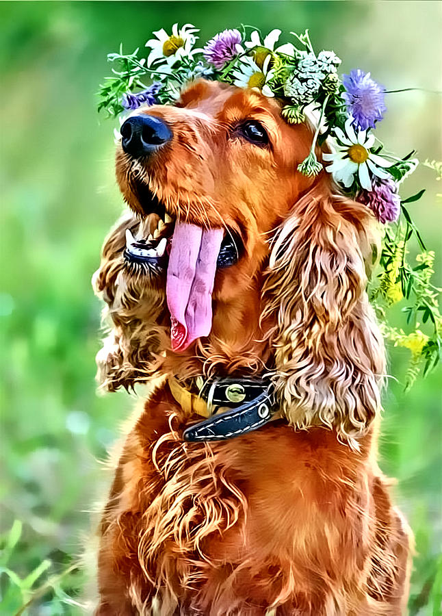 Dog Photograph - Princess Daisy by Kathy Tarochione