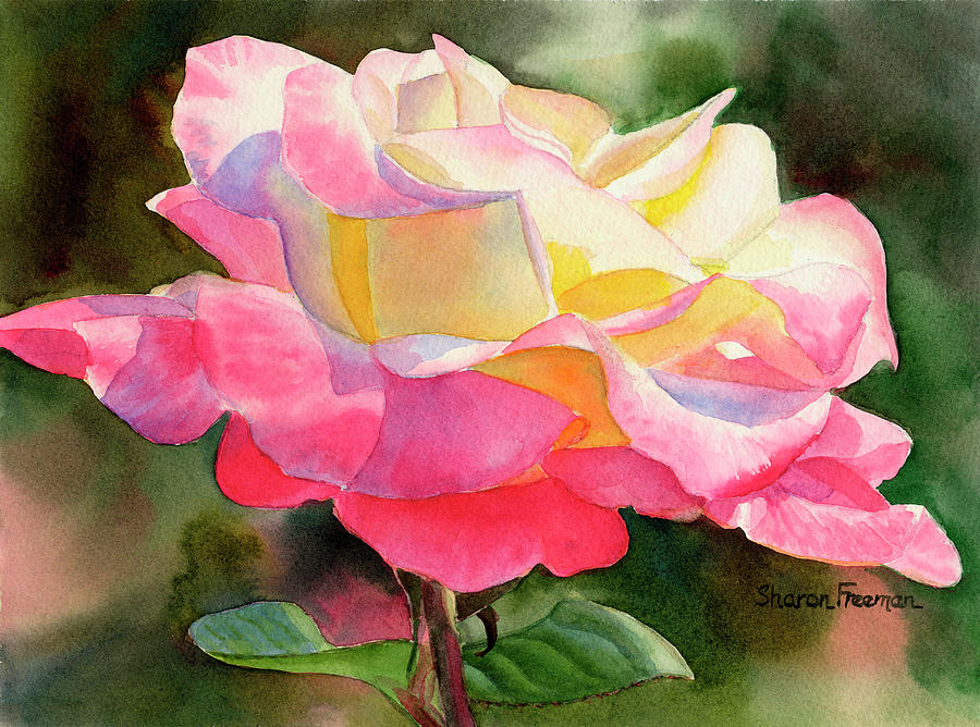 Pink Rose Painting - Princess Diana Rose by Sharon Freeman