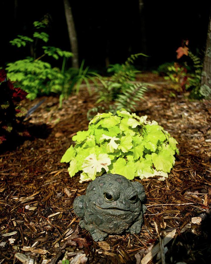 Private Photograph - Private Garden Go Away by Douglas Barnett